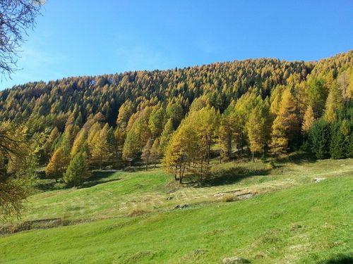 Goldener Herbst1